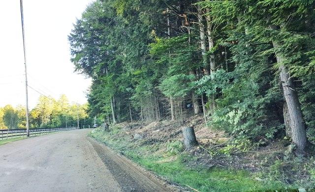 tree stumps along West Farms Road