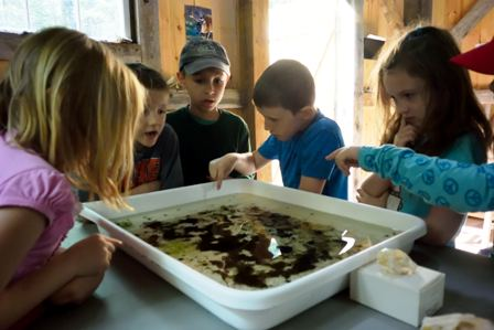 children observing water ecology pan